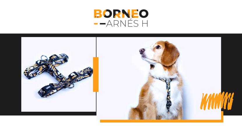Ficha Arnes Borneo