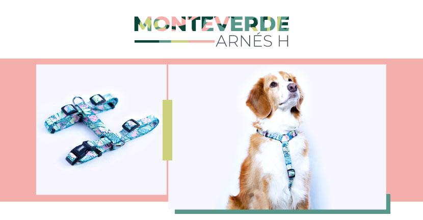 Ficha Arnes Monteverde