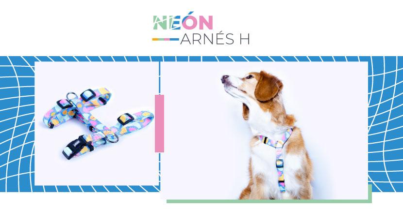 Ficha Arnes Neon